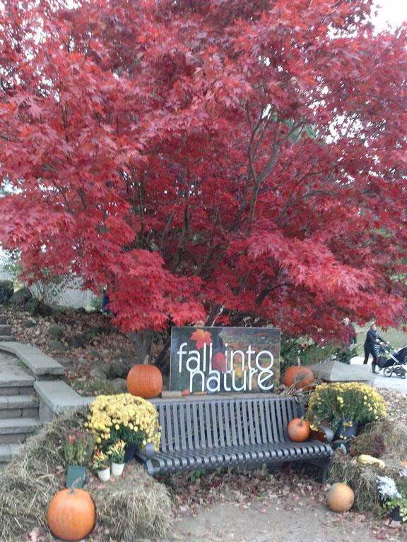 fallleaves14